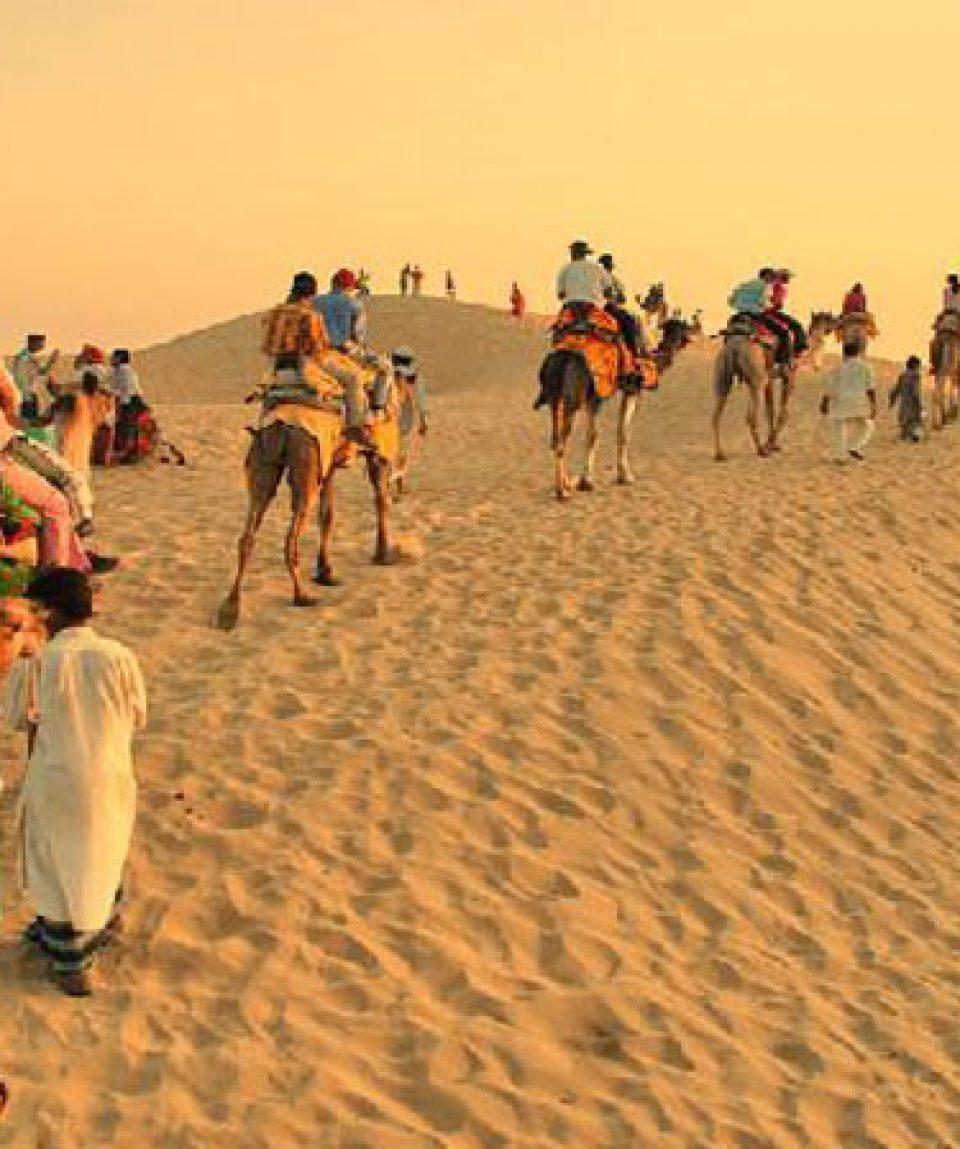 camel safari2